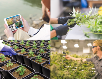 Cannabis Industry Secondary Image